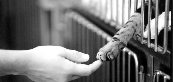 Supporting Pets