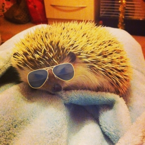 Lord Theo - Lord Theo the Hedgehog